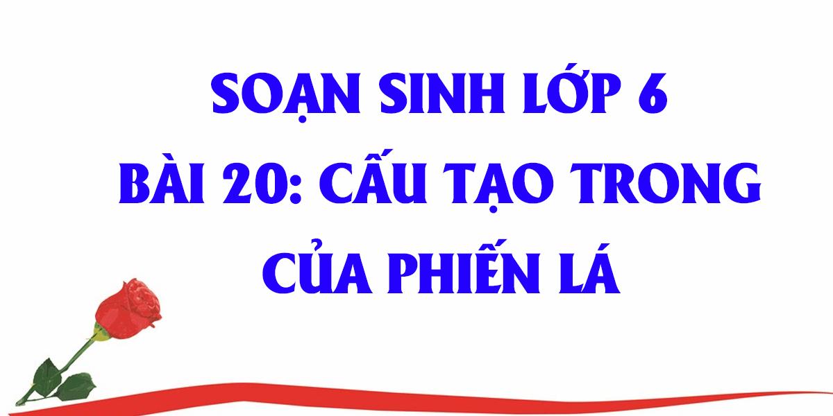 soan-sinh-hoc-lop-6-bai-20-cau-tao-cua-phien-la-day-du.png