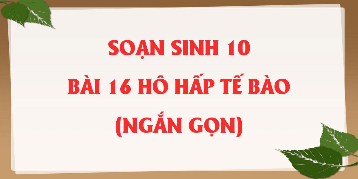 soan-sinh-hoc-10-bai-16-ho-hap-te-bao-ngan-gon-nhat.png