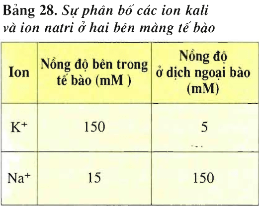 Lý thuyết Sinh học 11 Bài 28: Điện thế nghỉ | Lý thuyết Sinh học 11 đầy đủ, chi tiết nhất