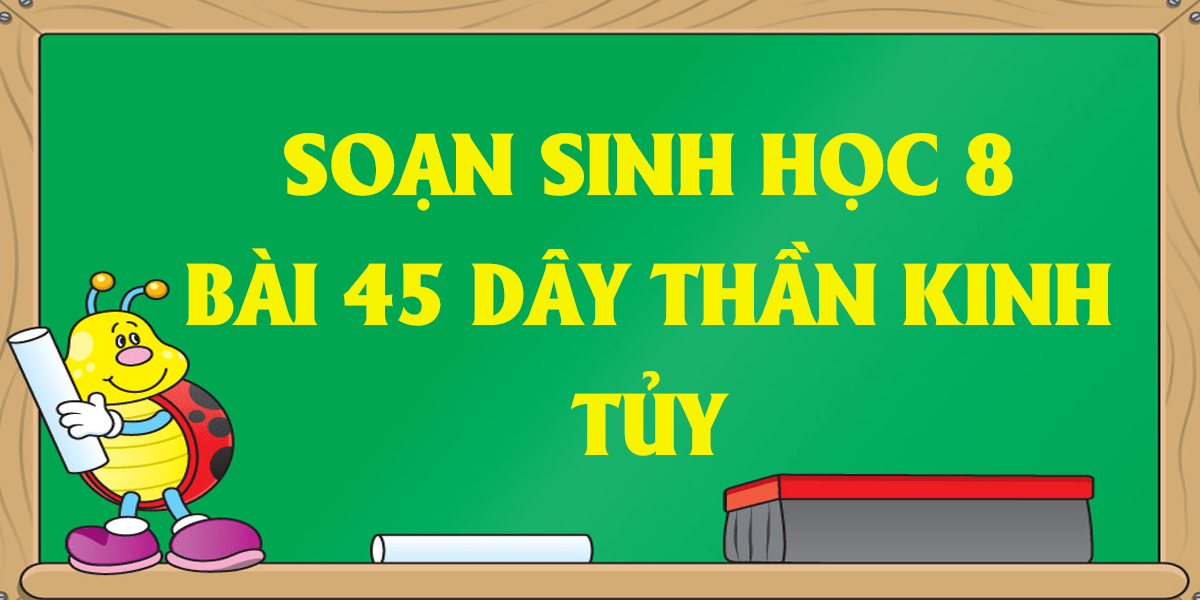soan-sinh-8-bai-45-day-than-kinh-tuy-ngan-gon.png
