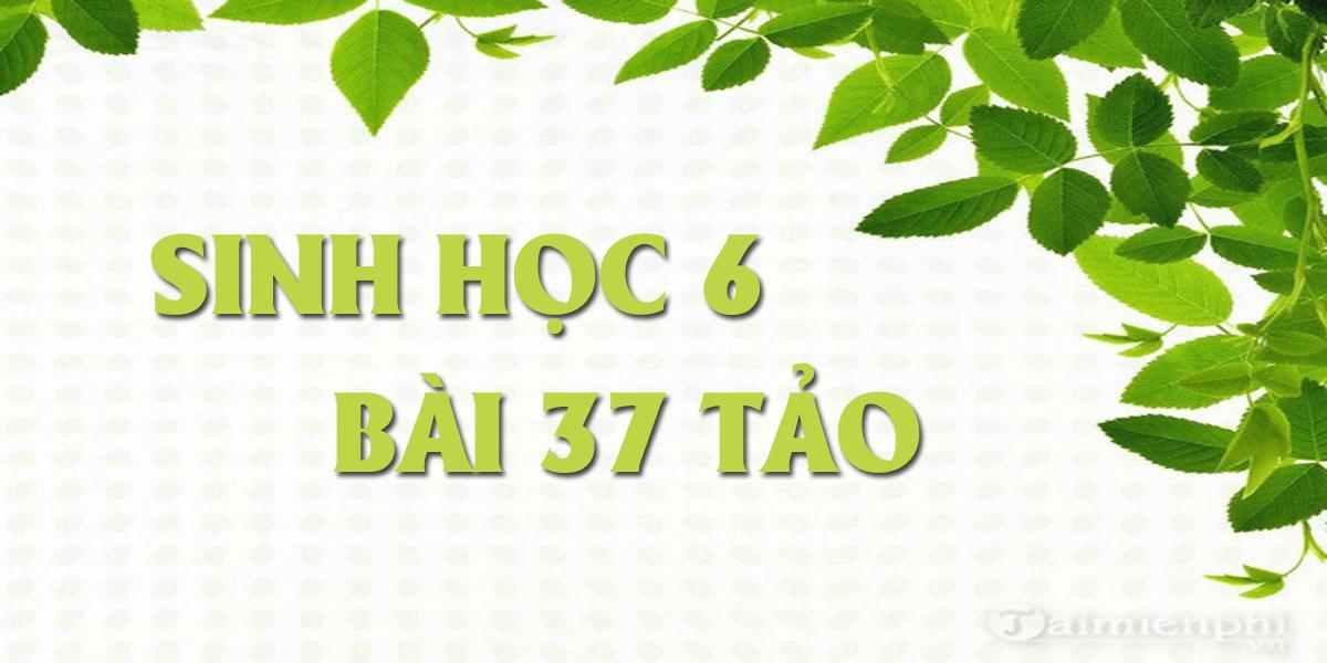 soan-sinh-hoc-6-bai-37-tao-ngan-gon-nhat.png