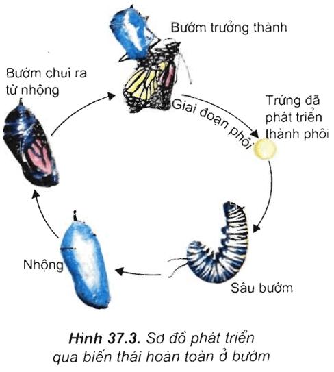 Lý thuyết Sinh học 11 Bài 37: Sinh trưởng và phát triển ở động vật   Lý thuyết Sinh học 11 đầy đủ, chi tiết nhất