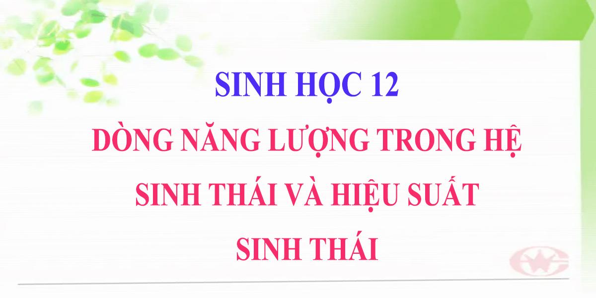 sinh-12-bai-45-dong-nang-luong-trong-he-sinh-thai-va-hieu-suat-sinh-thai-2.png