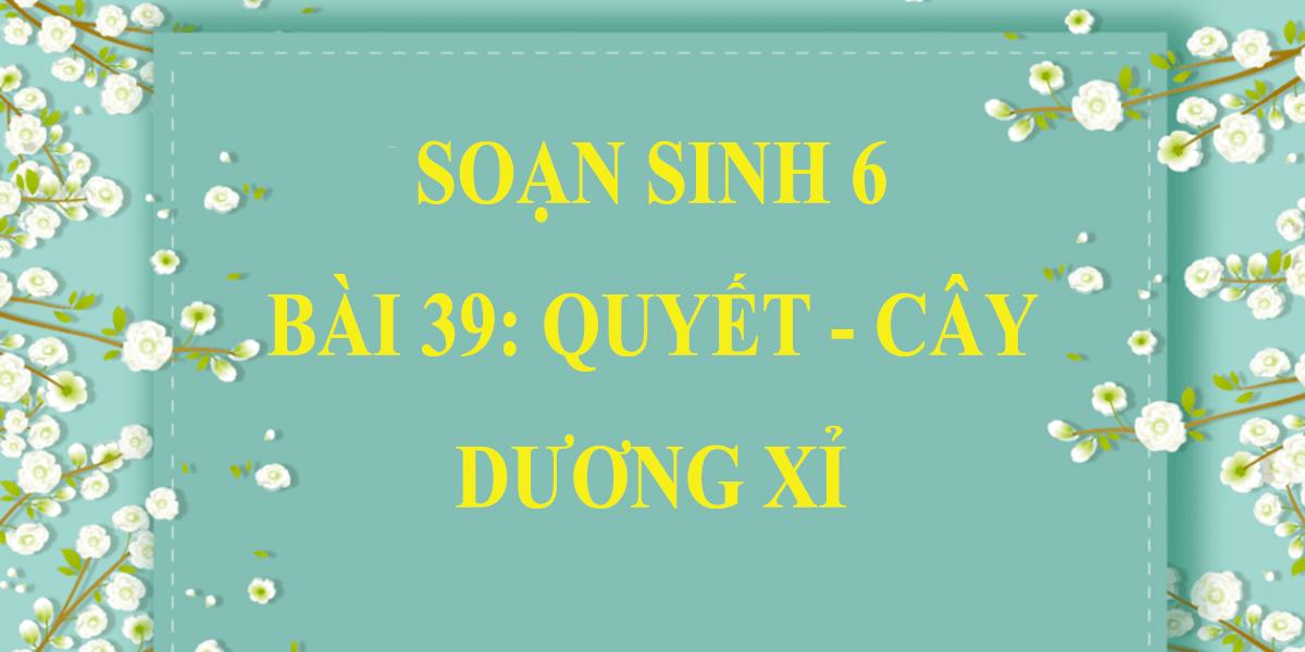 soan-sinh-hoc-6-bai-39-quyet-cay-duong-xi-ngan-gon-nhat.png
