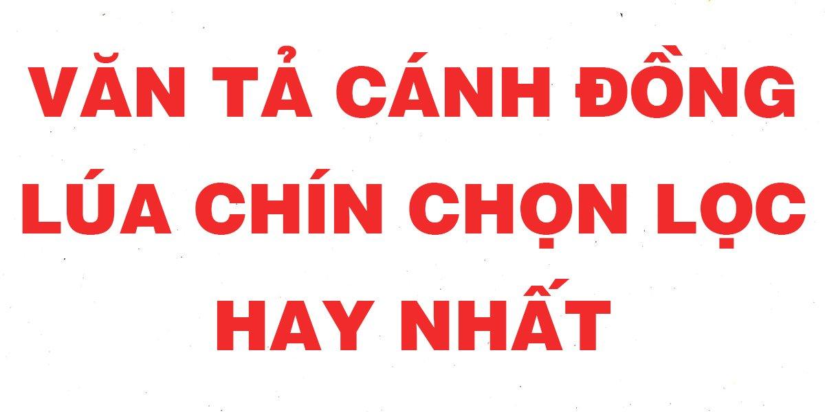 nhung-bai-van-mau-ta-canh-dong-lua-chin-chon-loc-hay-nhat.jpg
