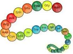 Lý thuyết Hóa 12 Bài 11: Peptit và Protein