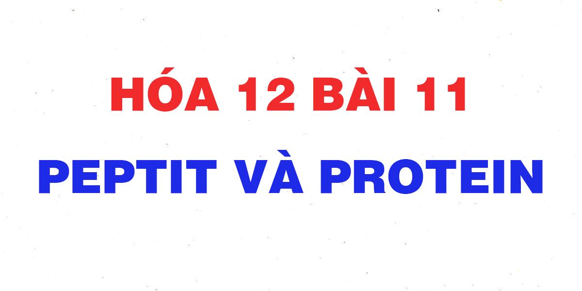 soan-hoa-12-bai-11-peptit-va-protein-giai-bai-tap-sgk-trang-55.png
